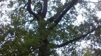 Jelikož jsem na keši Lesní velikán sundal ze stromu dva nahazovací arboristické pytlíky patřící kačerovi snickem giovanbronghorst a já strašně nerad něco posílám poštou, protože nejsem schopen vyplnit ty jejich […]